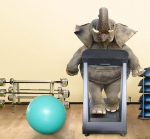 elephant-on-treadmill[1]